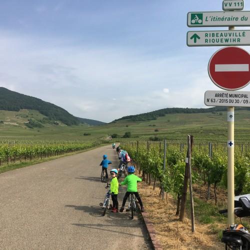 Wine Routes & Vosges